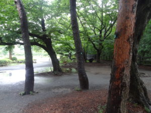 Mitaka Urban Camping Japan